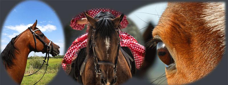 Image chevaux