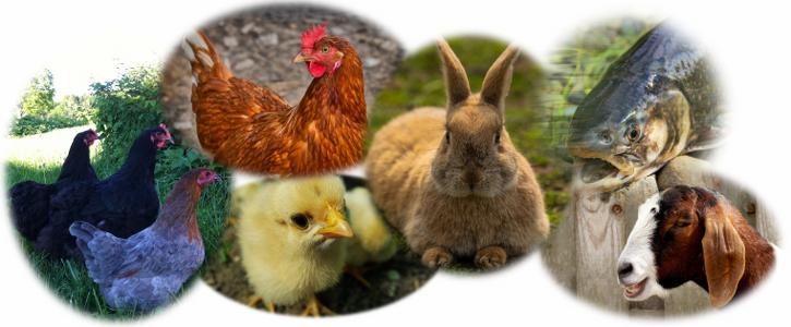 Image cms animaux de ferme