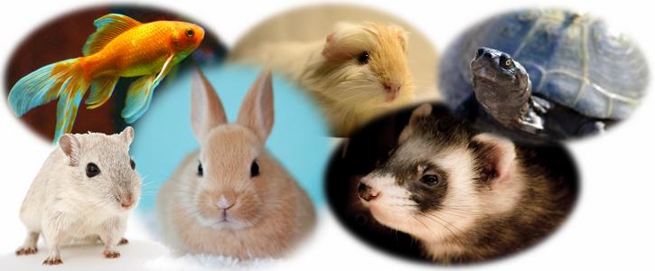 Image cms petits animaux